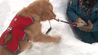 Colorado Puppy Trains To Save Avalanche Victims