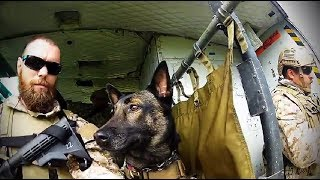 Navy Seal & K9 Demo-battlefrog Series