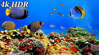 Butterfly Fish Aquarium 4k Ultra HD. 4K Aquarium for Relaxation Water Sound. 4K UHD Underwater Fish.