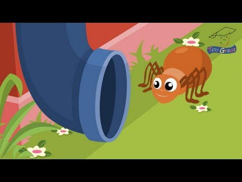 The Itsy Bitsy Spider. TinyGrads. Homeschool families