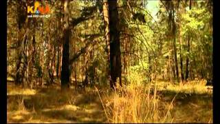 Beutolomäus kommt zum Weihnachtsmann - Folge 13 - Die Tasse der Geschenke