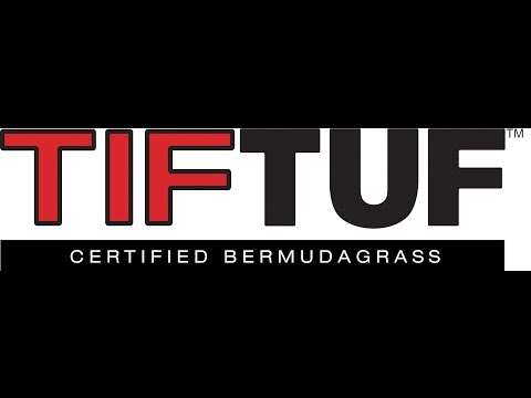 TIFTuf Drought Tolerant Bermudagrass Turf