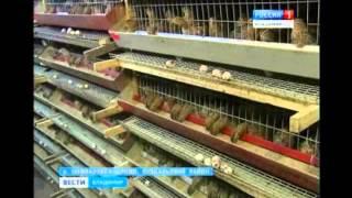 Rich birds (ричь бёрдз) - деньги на яйцах, как правильно играть, все подробности игры