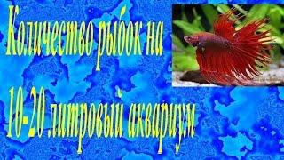 Количество рыбок на 10-20 литровый аквариум
