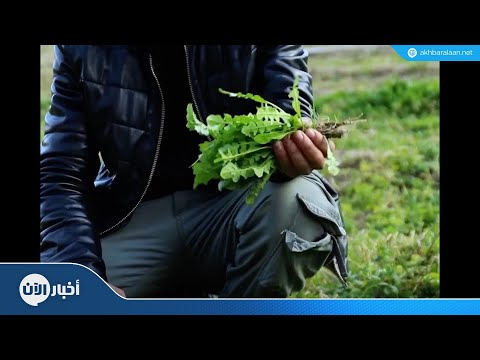 حاصر حصارك | زراعة الأسطح  - نشر قبل 11 ساعة