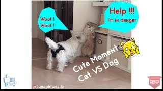 Look?! What Happened To A Super Cute Cat VS Naughty Dog