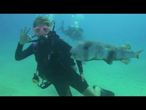 4 saint martin scuba diving with ocean explorers dive center youtube. Black Bedroom Furniture Sets. Home Design Ideas