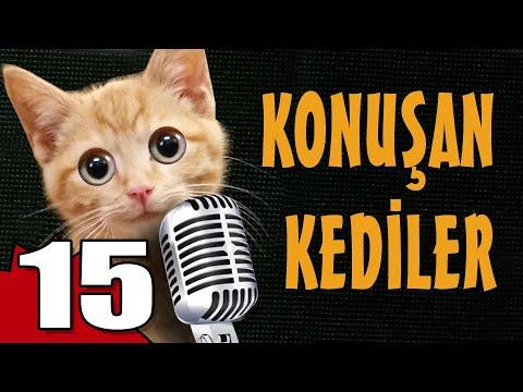 Konuşan Kediler 15 - En Komik Kedi Videoları
