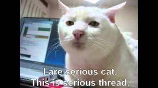Супер слайдшоу котов и кошек!)