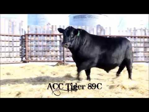 ACC Tiger 89C