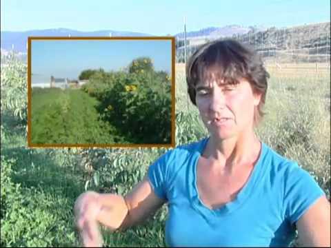 Φυσική veganic καλλιέργεια