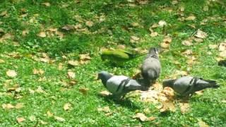 Наблюдая за птицами... Разговор о странном человеке.
