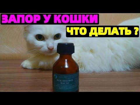 Вопрос: Как простимулировать кота сходить в туалет?