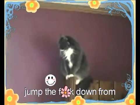 Yelling at cats KARAOKE