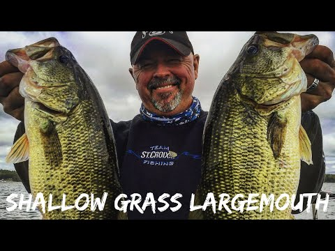Largemouth Bass In Shallow Water- NEW Full Length Eps_S_16