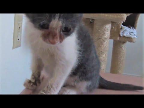 8 Week Old Kitten Losing Fur