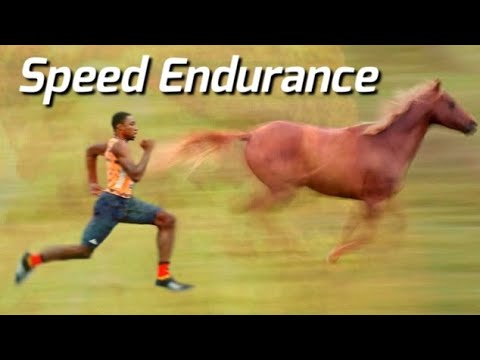 Human Vs Horse Speed Endurance Comparison