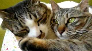 (撮影:2010 03 12) 仲良くお昼寝するふたり。