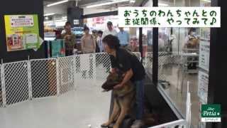 【横浜犬のしつけFACEBOOKページ】 https://www.facebook.com/y...
