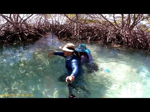 las-aventuras-kayakeras-del-club-aqua-sports-kayaks-en-puerto-rico
