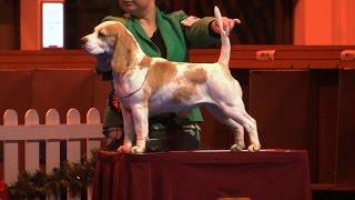 Ladies Kennel Association 2016 - Hound group Shortlist