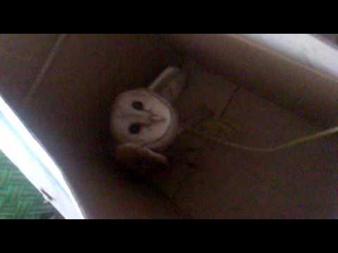 velli moonga/barn owl