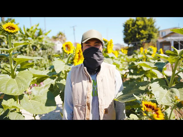 Alma Backyard Farms: Urban Farming in Compton