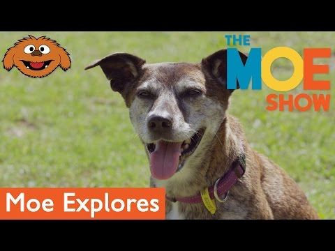 The Moe Show: Moe Explores — Dog Safety