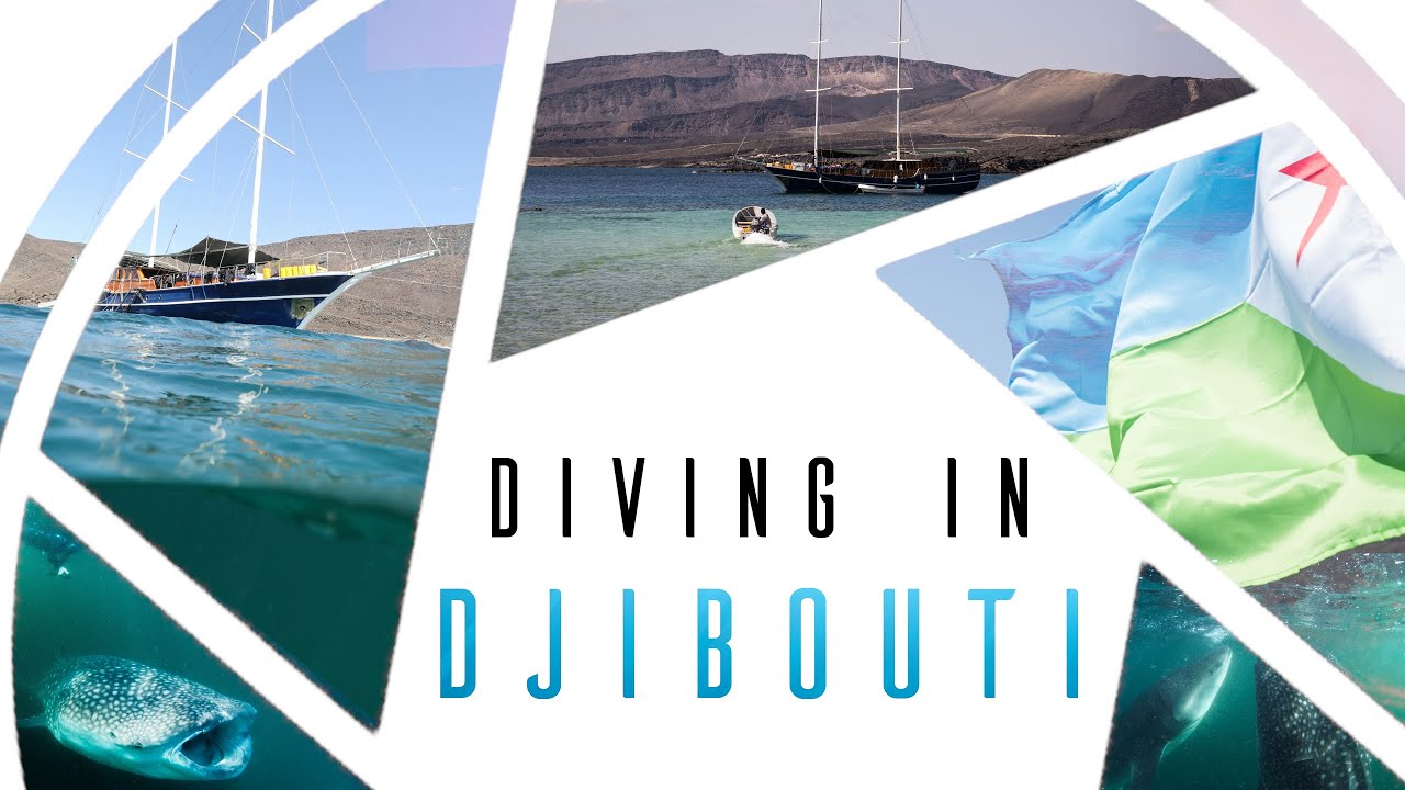Diving in Djibouti -  Nostalgia (Swim with whale sharks, dive between continents, diving in Africa)