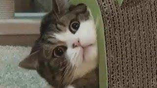 犬、猫、動物たちの癒しと笑えるハプニング動画まとめです チャンネル登...