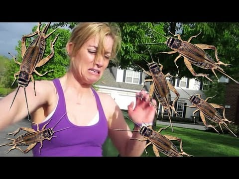 TERRIFYING CRICKET PRANK