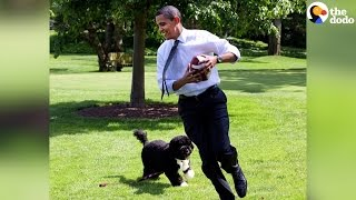 Bo, Sunny Obama Say Goodbye To The White House