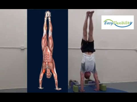 how to handstand progression tutorial muscle animation