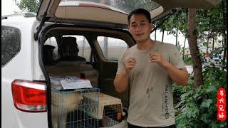两只小狗去新家,路途遥远,雇佣专车很贴心\It's very considerate to send two puppies to a new home in a special car