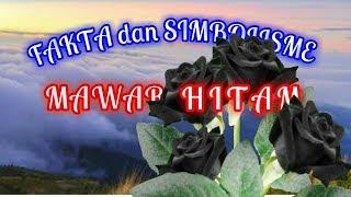 Fakta Bunga Mawar Hitam The Black Rose
