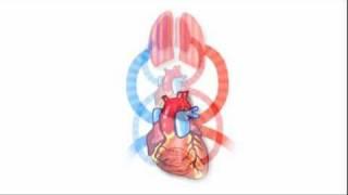 Bloedsomloop en bloedvaten uitgelegd