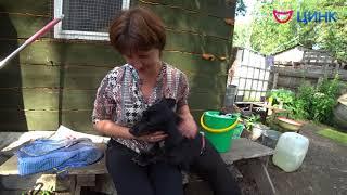 База реабилитации для животных попавших в трудную жизненную ситуацию