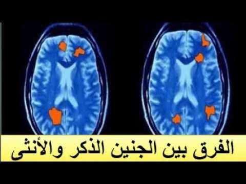 الفرق بين الجنين الذكر والانثى смотреть видео бесплатно онлайн