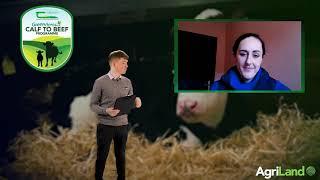 小牛展 - 周三 - 小牛健康和疫苗接种