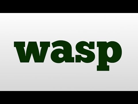 wasp meaning and pronunciation