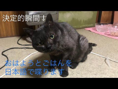 しゃべる黒猫総集編