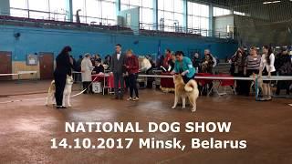 NDS 14.10.2017 | #AKITA DOG SHOW BELARUS, MINSK | #АКИТА ВЫСТАВКА СОБАК БЕЛАРУСЬ, МИНСК | #犬秋田