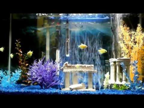 My 29 Gallon Aquarium W Blue Led Bubble Wand Youtube
