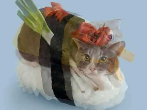 Sushi Cats Lol New Internet Meme Youtube