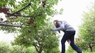 Apple picking season begins