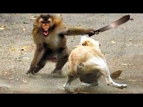 10 moments m ga dr le de singes rigolo a mourir de rire film s en direct incroyable rire ouf - Petit singe rigolo ...