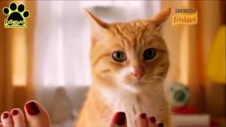 Friskies от Purina (Реклама)
