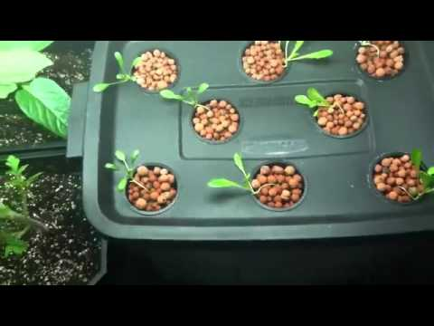 Vegetable gardening for beginners l container vegetable gardening