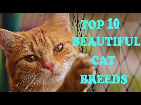 TOP 10 BEAUTIFUL CAT BREEDS
