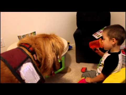 How To Get A Free Service Dog For Autism